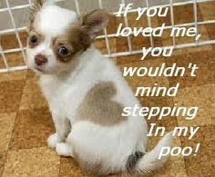 Symdaddy Humour: 103. Unloved Puppy!