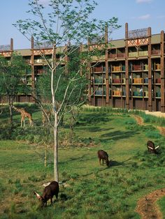 Orlando, FloridaA stay at Disney's Animal Kingdom Lodge Resort in Orlando will feel more like a visit to Africa than Florida. Take a walk around the grounds, and you're likely to spot more than 30 species of African wildlife. The lodge is home to 200 resident animals and birds, including gazelles, flamingos, zebras, and giraffes.