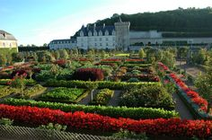 The Chateau and Jardins de Villandry. This place is amazing....how do they get those plants to behave so precisely?