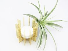 Klick tealight messing airplant holder