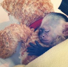 Justin Bieber's confiscated pet monkey