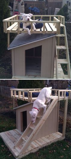 Fancy Dog House