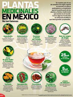 Plantas medicinales poco conocidas de Mexico. #remediosnaturales #plantas #infografia