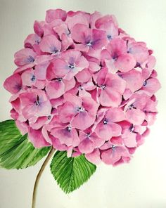 Pink Hydrangea Silk Painting, Watercolour Painting, Watercolor Flowers, Watercolors, Hortensia Hydrangea, Hydrangea Flower, Hydrangeas, Hydrangea Painting, Arte Floral