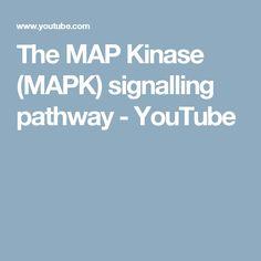 The MAP Kinase (MAPK) signalling pathway - YouTube