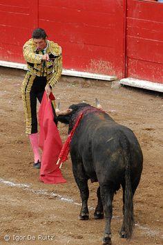 Ana no le gusta la corrida de toros porque ella no piensa es bueno. También Ana es un vegetarian y no le gusta la mata a los anímales.