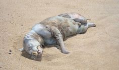 Plum Island, uno degli animali mostruosi ritrovati