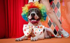 Concurso de fantasia para cães - Bichos - iG
