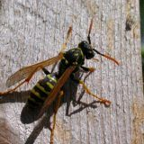 Wasp Sting Inspires the Invention of a New Home Remedy Home Remedy - The People's Pharmacy® - Trend Einfache Vorspeisen 2019 Belize All Inclusive, Belize Honeymoon, Belize Travel, Belize Diving, Belize Barrier Reef, Red Wasp Sting, Caye Caulker Belize, Wasp Stings
