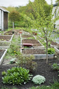 garden tour :: raised beds