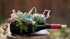 Succulents in wine bottles.
