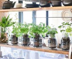 Gardening Ideas, Tips & Techniques Water Garden, Herb Garden, Lawn And Garden, Indoor Garden, Indoor Plants, Green Garden, Green Plants, Green Flowers, Vegetable Garden Tips
