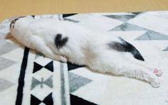 おかげさまで、毎回話題沸騰のanan「にゃんこ LOVE」特集。今年もみなさまから寄せられた猫さまの写真を厳正に審査し「anan2…