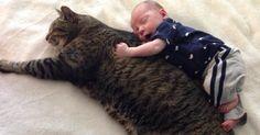 Ce chat et ce bébé sont les meilleurs amis du monde depuis toujours Inséparable depuis leur rencontre, un jeune garçon et son vieux chat partagent les plus tendres des moments…