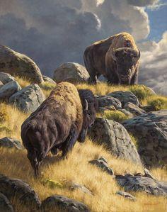Crossing Paths by Dustin Van Wechel Wildlife Paintings, Wildlife Art, Animal Paintings, Animal Drawings, Buffalo Animal, Buffalo Art, Buffalo Pictures, Bigfoot Photos, Native American Pictures
