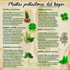 Plantas que protegen tu hogar                                                                                                                                                      Más