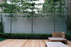 espalier trees to provide privacy and fruit Courtyard Landscaping, Small Courtyard Gardens, Modern Courtyard, Small Courtyards, Small Gardens, Courtyard Ideas, Landscape Design, Garden Design, London Garden