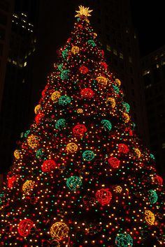 ba866014174 1246 Best Christmas Trees(Outside) images in 2019