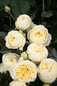 Wedding Piano.  Order them online @ www.parfumflowercompany.com or go visit your florist.