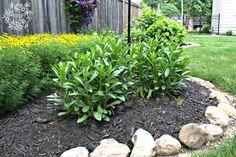 Hometalk :: A DIY Gardener's Guide to Hardy Perennials