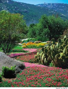Rancho La Puerto. Baja California. I have a friend who works here. Always wanted to go. Yoga. Massages. Meditation. Nutrition. Perfect.