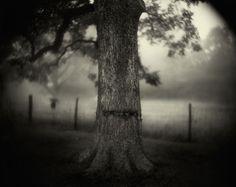 Sally Mann - Deep South. Civil War scar