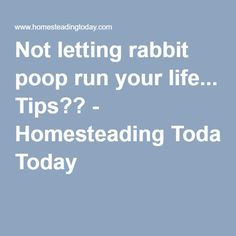 Not letting rabbit poop run your life... Tips?? - Homesteading Today