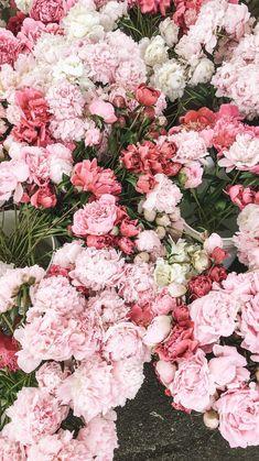 Pink is unconditional love - Hintergrund - ♡ Pink Flowers ♡ The Effe - Frühling Wallpaper, Flower Iphone Wallpaper, Aesthetic Iphone Wallpaper, Aesthetic Wallpapers, Wallpaper Backgrounds, Peonies Wallpaper, Spring Flowers Wallpaper, Rare Flowers, Flowers Nature