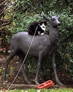 When President Clinton and his family first went to the White House, they had a cat, named Socks. On Christmas Day 1994, Socks perched herself atop a reindeer statue behind the Oval Office.
