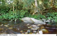 witels river - Google Search Rivers, Google Search, Outdoor Decor, River, Lakes