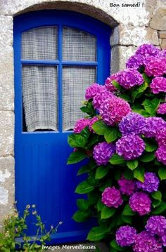vibrant blue door and vivid hydrangeas