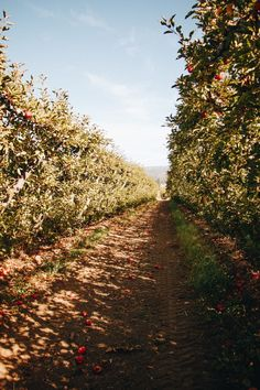 Things to do in the Fall in the Bay Area. Northern California Travel, Live Earth, Fun Fall Activities, Glass Pumpkins, Bay Area, Pacific Northwest, Palm Trees, Things To Do, Scenery