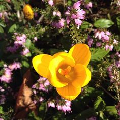 #mindfulness#achtsamkeit#winter#gardening#garten#natur#nature#naturelovers#landliebe#landlust#bauerngarten#gartenglück#gartenliebe#wachstum##growth#flowers#blumen#floral#krokus#structure#life#leben#bud#knospe#crocus#kreislauf#neuanfang#garden#springfowers#frühlingsblumen
