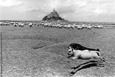 Mont-Saint-Michel. Le mouton et le chien by Francois Le Diascorn
