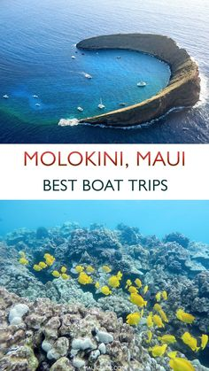 Find the right boat to take you to Molokini Crater from the south coast of Maui, Hawaii. We share best boats from Kihei Boat Ramp, Maalaea Harbor & Makena. #molokini #molokinicrater #molokinisnorkeling #molokinimaui #molokinitours #mauisnorkeling #maui #hawaii #snorkeling #scuba #snuba #boats Hawaii Travel Guide, Usa Travel Guide, Travel Usa, Travel Tips, Places To Travel, Places To Visit, Ocean Activities, Boat Tours, Maui Hawaii