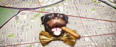 Triumph the Insult Comic Dog Delivers World Cup Laughs on CONAN