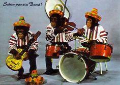 Mexican Monkeys