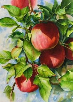 Watercolor painting demonstration of red apples step 6 hadows darkened and red into tips of leaves
