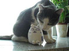 Cat - Bianca & Pompon on www.yummypets.com