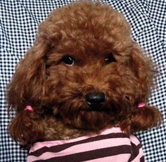 #pet#dog yinghaizheng
