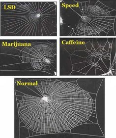 Amazing Things in the World:  The effect that various drugs have on the web building abilities of the common garden spider. (Wonder who did these tests!!)