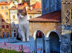 Un Micio a Italia in Miniatura!