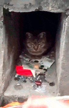 Este Señor Gato Sólo Recibe No Dá gif divertido