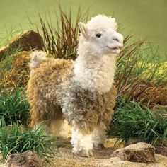 Prized for their lustrous, warm fleece, Alpacas grow their long wooly coats to withstand the crisp mountain air. The Folkmanis ALPACA Puppet is as soft and gentle as a Peruvian flower. Its sweet face and ultra-soft micro fiber body plush make this Alpaca Full Body Puppets, Wise Eyes, Animal Hand Puppets, Alpaca Stuffed Animal, Alpaca Animal, Stuffed Animals, Little Red Hen, Soft And Gentle, Soft Suede