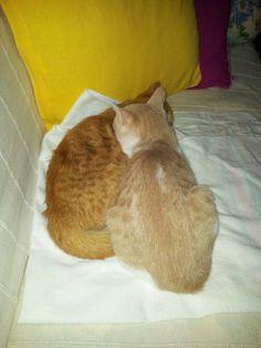 Cat love!!