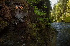 photos by connor stefanison, a twenty one year old nature photographer from burnaby, who documents wildlife in the bc interior. he was awarded the rising star portfolio award in the 2015 wildlife. Photography Awards, Wildlife Photography, Photography Ideas, British Isles, British Columbia, Royal Ontario Museum, Year 2016, Natural History, Cool Photos