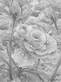 Rose flower advanced detailed Coloring for adults-kleuren voor volwassenen