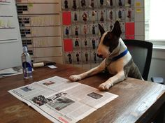 Have You Met Neville Jacobs? Marc Jacobs' Dog Takes Over LOVE Magazine's Website