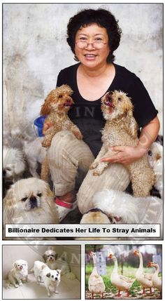 Billionare Dedicates Her Life To Animals And The Animal Protection Law In China - Animal Rights Zone
