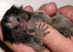 Cute And Little Baby Monkeys - Lovely Animal 6
